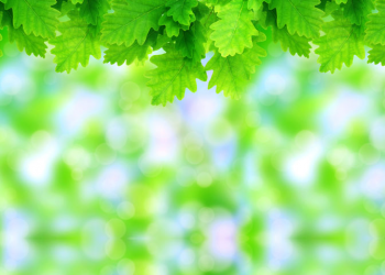 Green leaves on blurred abstract background